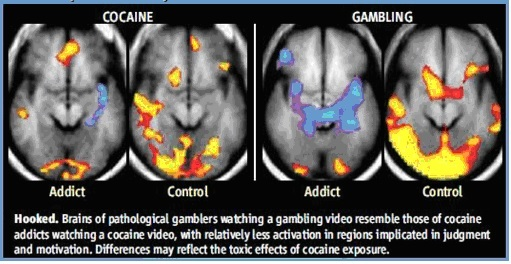 Gambling and brain addictions gambling calculator odds